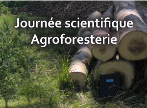 Journée scientifique - Agroforesterie