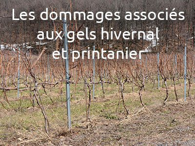 Rediffusion -  formation vignerons et conseillers