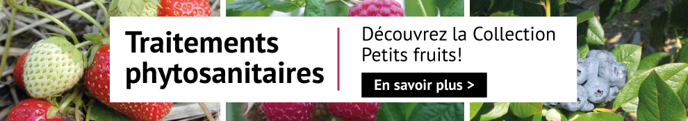 Collection petits fruits