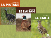 Collection Caille-Faisan-Pintade