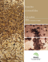 Fiche synthèse - Insectes comestibles (PDF)