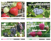 Collection Petits fruits : Guides des traitements phytosanitaires 2014 (PDF)