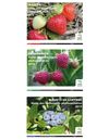 Collection Petits fruits : Guides des traitements phytosanitaires 2015 (PDF)